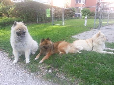 23.8.14 Trio Doris