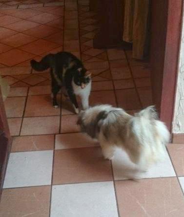 13.9.14 Charly mit Katze