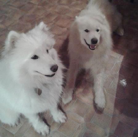 6.9.14 Kira und Sam