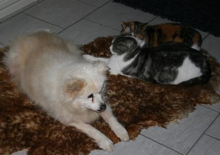 22.11. Nana mit Katzen