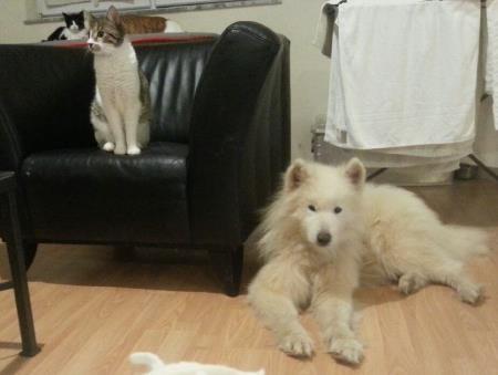 17.1. Luko und Katzen 2