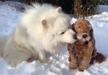 Polaris und Bella