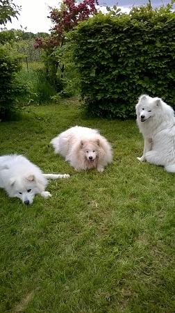 Trio Infernale unter dem Weißen Baum