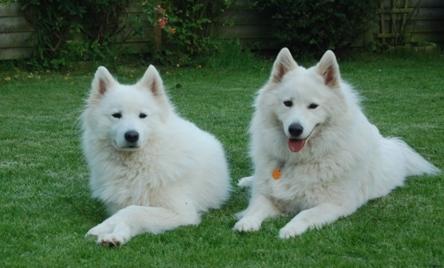 Rechts Mila vorher Candice und Nala (Chochi)