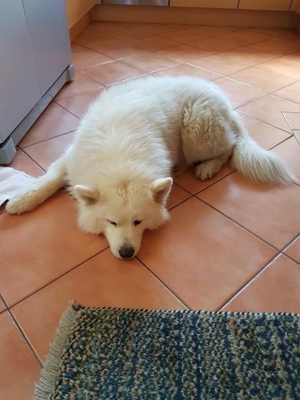 Alba müde