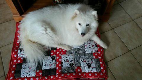 Luna mit Decke