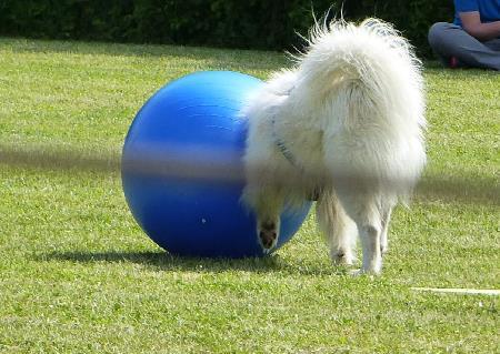 Takoda Ball
