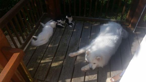 Ayla und die Katzen