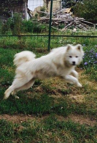 A Amico kann fliegen