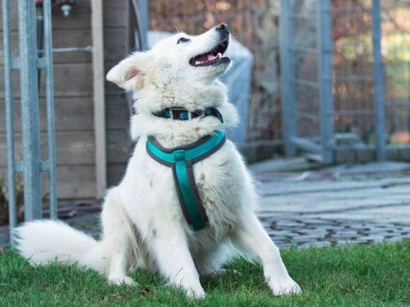 Bellafrieda oder der Hund mit den vielen Namen